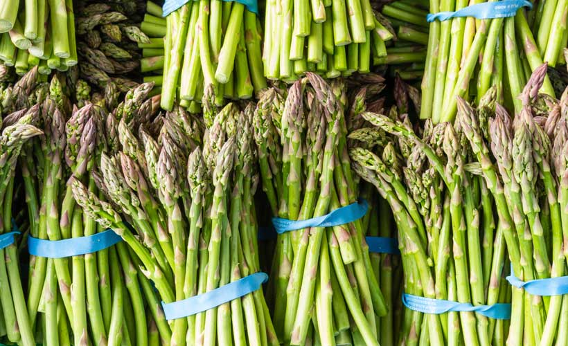fresh-asparagus-bunches-for-cooking
